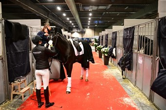 The stabling area of hall C is open to spectators and holds all stallions (that do not take part in the international competitions), young horse champinship competitors, the royal guards' horses and gala show horses.